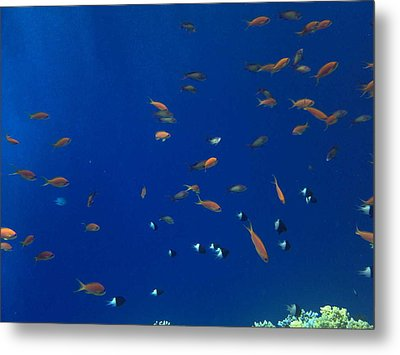 Life Under Water Metal Print by Isabelle Hansen
