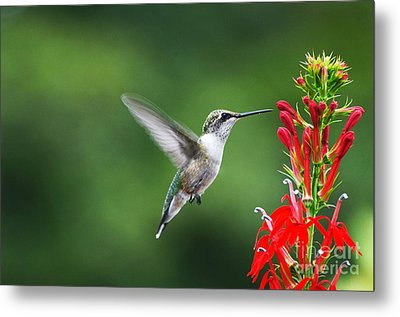 Metal Print featuring the photograph Lifes Little Pleasure by Judy Wolinsky
