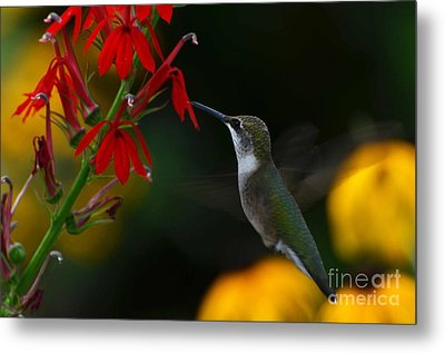 Metal Print featuring the photograph Lifes Little Pleasures 2 by Judy Wolinsky