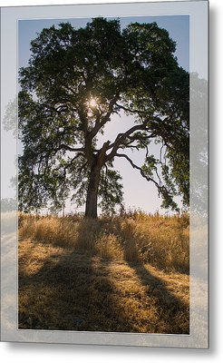 Light And Life Metal Print