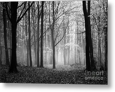 Light And Shadow Metal Print by Anne Gilbert