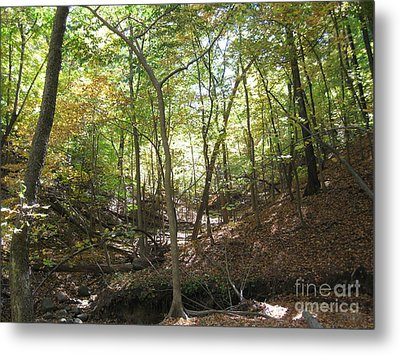 Light And Shadow Through The Forest Metal Print