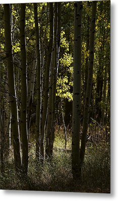 Light And  Shadows D0468 Metal Print by Wes and Dotty Weber