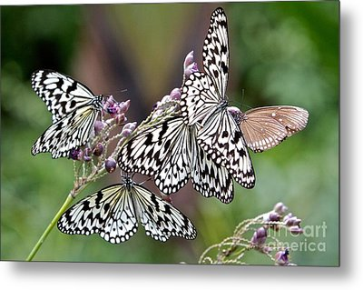 Light Encounter  Metal Print by Gary Bridger