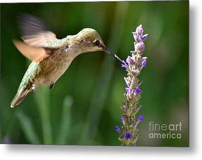 Light Filters Behind The Hummer Metal Print