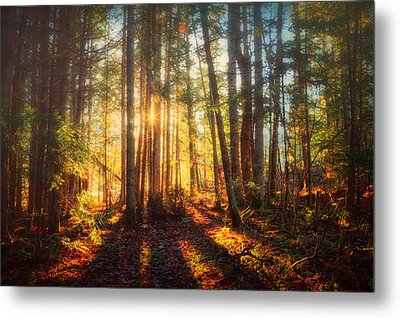 Light In The Forest Metal Print by Gary Smith