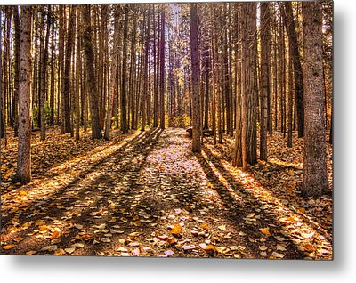 Light In The Forest Metal Print by Jim Sauchyn