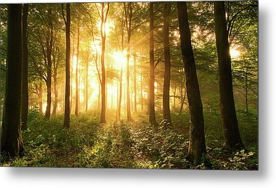 Light In The Forest. Metal Print