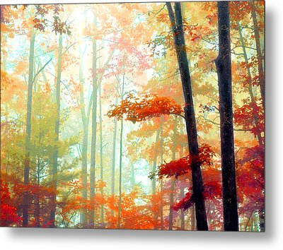 Light In The Forest Metal Print by William Schmid