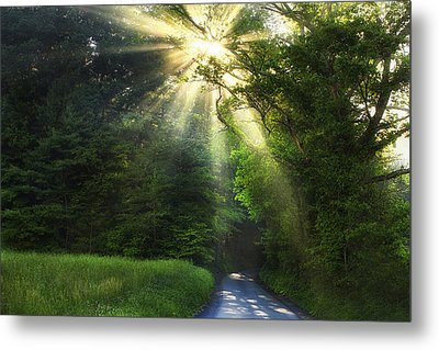 Light In The Woods Metal Print by Andrew Soundarajan
