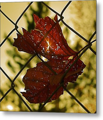 Light Leaf Links Metal Print