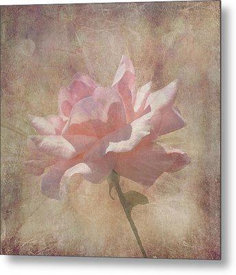 Light Pink Grunge Rose Metal Print by Rosalie Scanlon