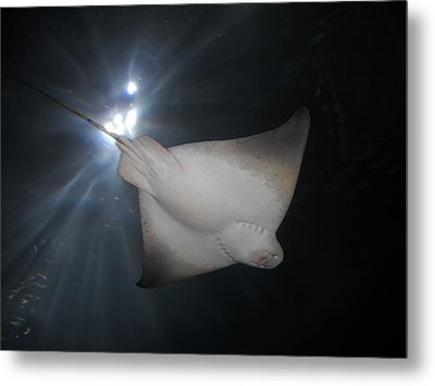 Metal Print featuring the photograph Light Ray by Kristen R Kennedy