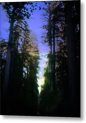 Metal Print featuring the digital art Light Through The Forest by Cathy Anderson