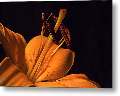 Light Touch Ll Metal Print by Shirley Mitchell
