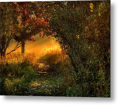 Lighted Path Metal Print