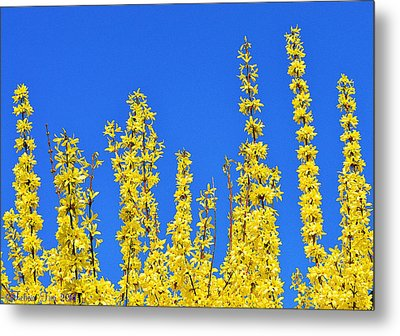 Lighting The Spring Sky Metal Print by Felicia Tica