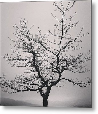Lightness Tree Metal Print by Jose Barbosa