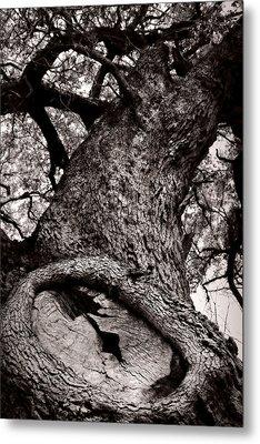 Lightning Tree  Metal Print by Trish Mistric