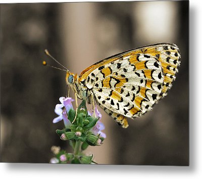 Metal Print featuring the photograph Like A Flying Tiger by Meir Ezrachi