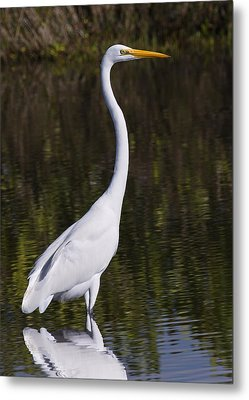 Like A Great Egret Monument Metal Print by John M Bailey