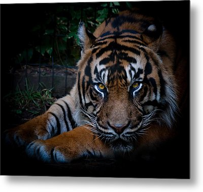 Like My Eyes? Metal Print by Robert L Jackson