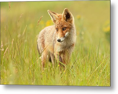 Lil' Hunter - Red Fox Cub Metal Print by Roeselien Raimond