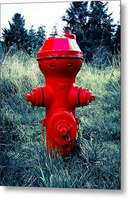 Lil Red Metal Print by Ronda Broatch