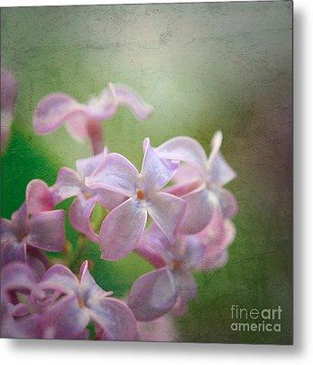 Lilac Dreaming  Metal Print