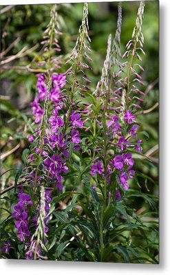 Metal Print featuring the photograph Lilac Flower by Leif Sohlman