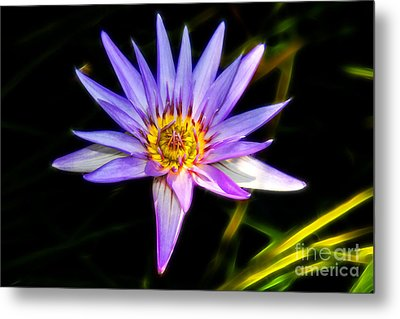 Lilac Lily Metal Print by Mariola Bitner