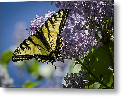 Lilac Tiger Metal Print