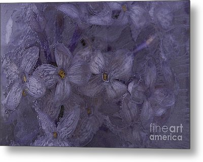 Lilac Under Ice 3 Metal Print by Chris Holmes