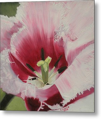 Lilicaea Tulipa Metal Print