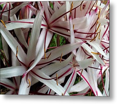 Metal Print featuring the photograph Lilies by Alohi Fujimoto