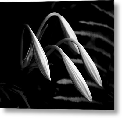 Lilies Of The Marsh B/w Metal Print by Marvin Spates