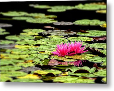 Lilies On Lake Hope Metal Print by Dick Wood