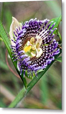 Lilikoi Flower Metal Print