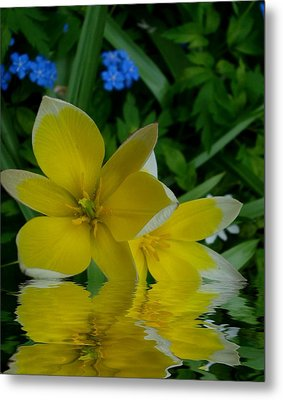 Lilium Of Gold Metal Print