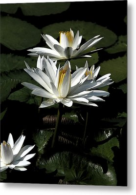 Lillies Metal Print by John Freidenberg