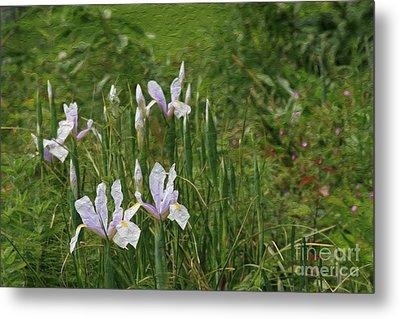 Lillies Of The Field Metal Print by Jennifer Apffel