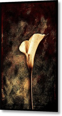 Lilly 2 Metal Print by Mauro Celotti