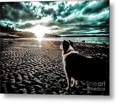 Lilly And The Sun Metal Print by Arlene Sundby