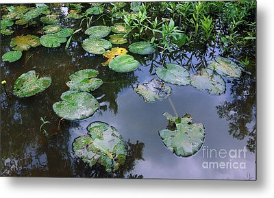 Lilly Pad Reflections Metal Print