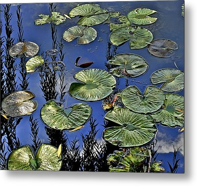 Lilly Pond Metal Print by Frozen in Time Fine Art Photography