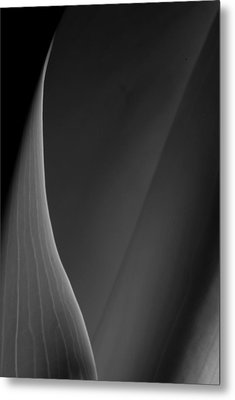 Lily 3 Metal Print by Joe Kozlowski