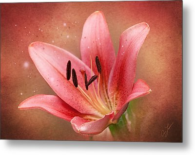 Lily Metal Print by Ann Lauwers