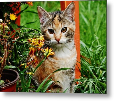Metal Print featuring the photograph Lily Garden Cat by VLee Watson