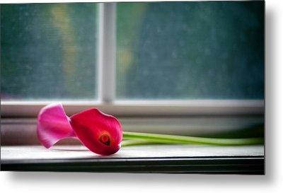 Lily In Window Metal Print by Tammy Smith