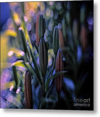 Lily Light Metal Print